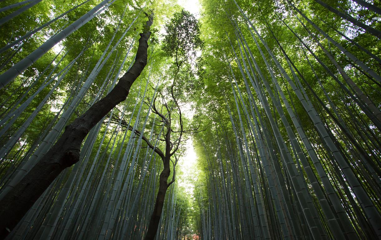Natürlicher Wald